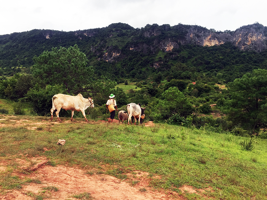 Myanmar Countryside www.taylorstracks.com