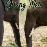 There is so much to know about Thailand travel as there are many destinations. But this list of the best things to do in Chiang Mai will help you plan the perfect Chiang Mai itinerary as a part of your dream Thailand itinerary. This Chiang Mai travel guide will make sure you have the best time. Click to start planning your Chiang Mai trip!