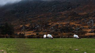 Things to do in Killarney Ireland