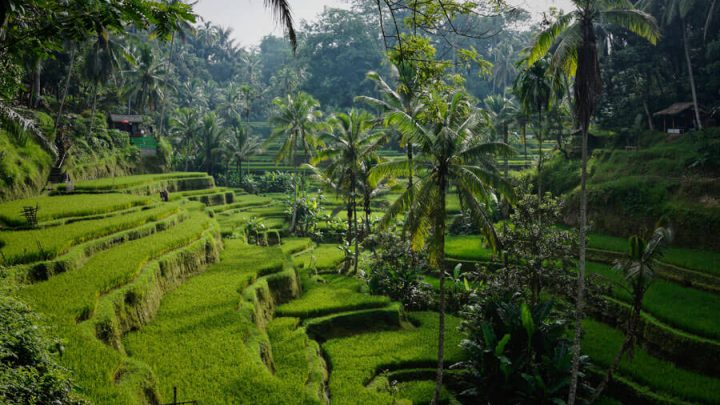 Best Time to Visit Bali: For Weather, Surfing, Sightseeing & More