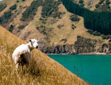Things to do in Nelson New Zealand