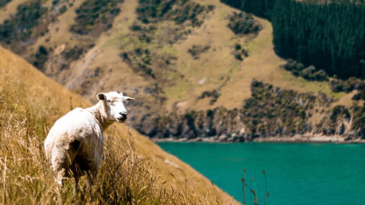 17 Fun Things to do in Nelson, New Zealand