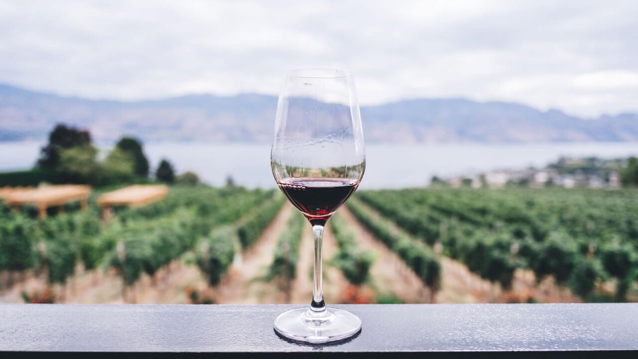 Yoga and Wine Retreats